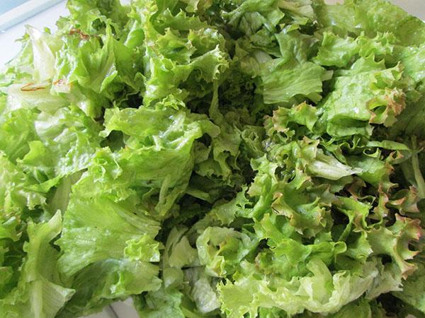 фото приготовления салата Цезарь на даче